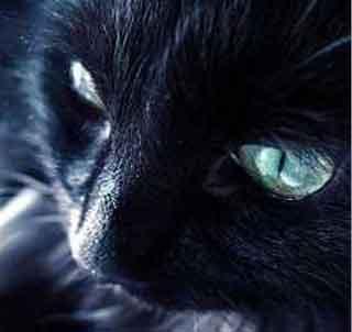 gatto3