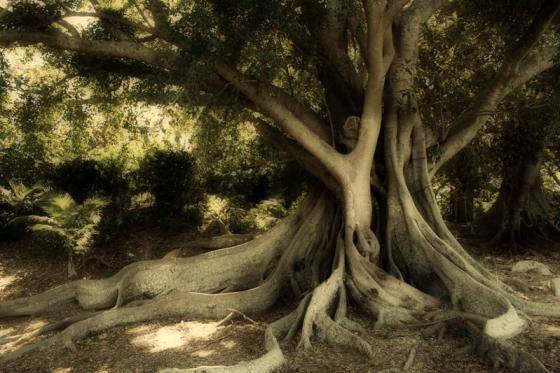 albero12 - Copia.jpg
